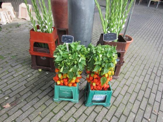 Amsterdamaugusti2011 005