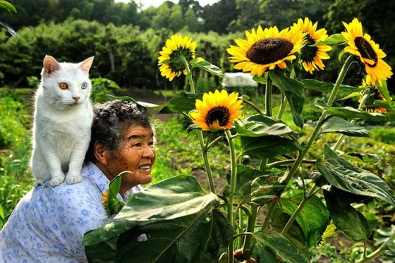 grandmother_and_cat_miyoko_ihara_fukumaru